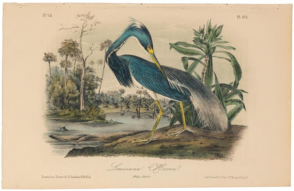 Original 2nd Octavo Edition Audubon Prints