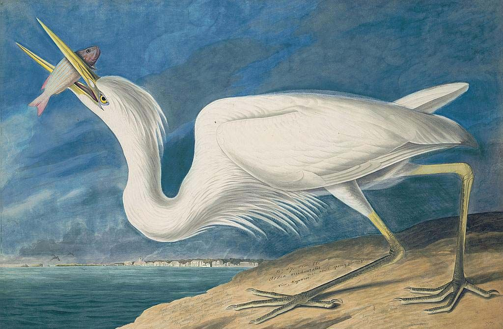 Audubon's Watercolors