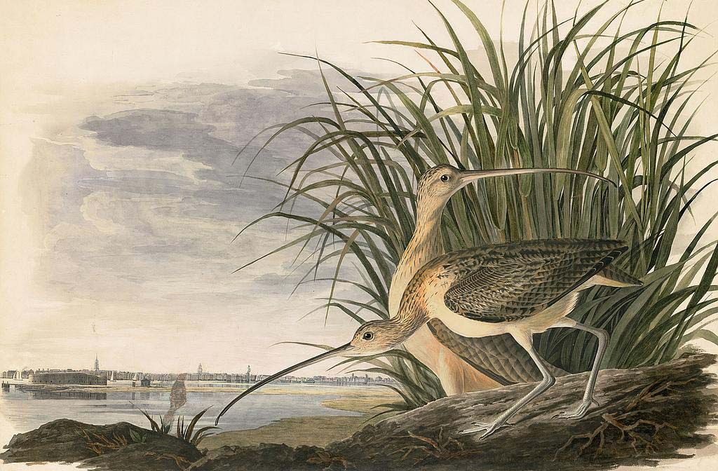 Audubon's Watercolors Octavo Edition