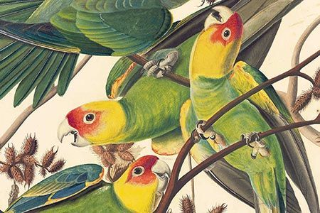 Natural History Art and Audubon Prints